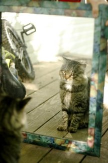cat looking in mirror, cute